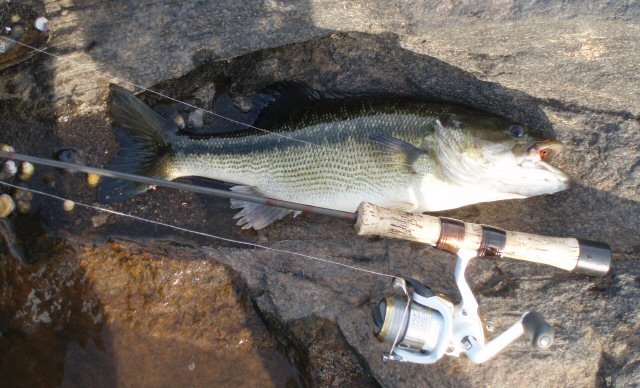 top tips for catching more bass fish